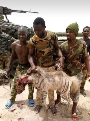 Nigerian Soldiers Fighting Terrorism Kill Hyena - Information Nigeria