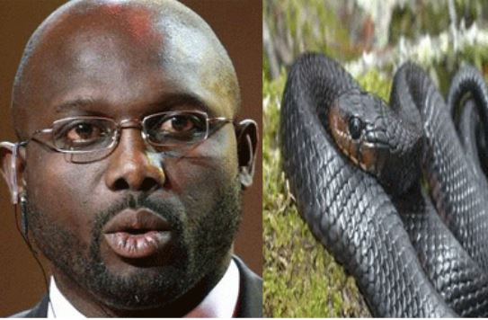 BREAKING: Liberian president forced out of office by snakes