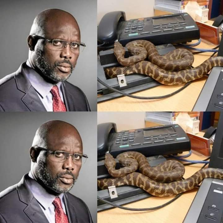 george - Drama As Snakes Chase George Weah Out Of Office