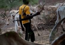 Fulani Herdsman