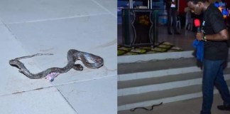Snake attacks RCCG Pastor in Lagos