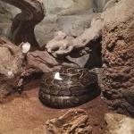 Vídeo: la espectacular puesta de huevos de la serpiente más grande de África en Valencia