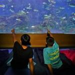El Oceanogràfic presenta la oferta escolar a los profesores valencianos