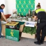 La Guardia Civil interviene cerca de 700 plantas de marihuana en Ribarroja del Turia y Montserrat
