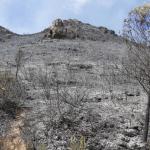 El riesgo de incendios forestales en la Comunitat es muy alto