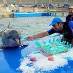 El Oceanogràfic celebra el cumpleaños de Neptuno