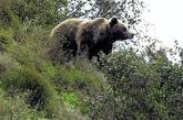 ES NOTICIA..El Zoo de Barcelona quiere especializarse en la fauna del Mediterráneo