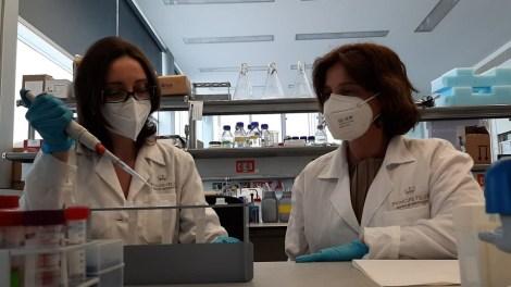 Los investigadores del CIPF trasplantaron neuronas en modelos animales de ratón (experimentos in vivo)./informaValencia.com