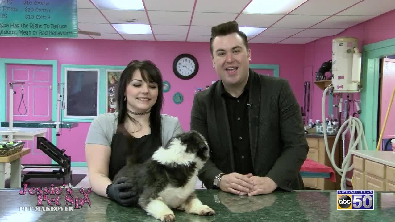 Jessie's Pet Spa Pet Makeover: Chumleigh