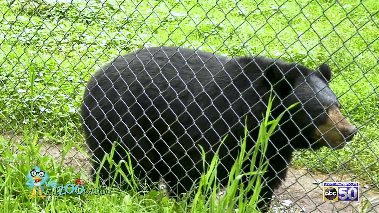 EdZooCation: Bears