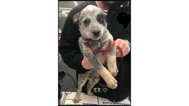 Found Puppy Seventh Heaven Rescue_1543893810761.jpg_64070037_ver1.0_640_360_1544016898605.jpg.jpg