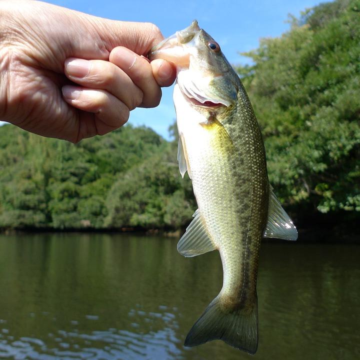 fishing-766952_960_720_1560343660710.jpg