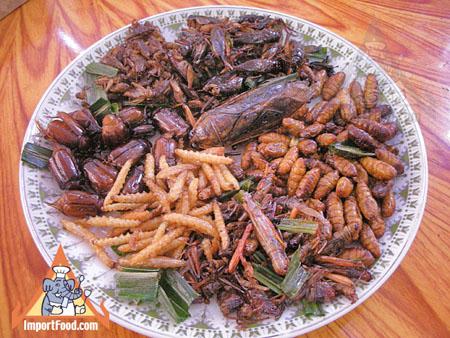 Bientôt des insectes dans nos assiettes ?