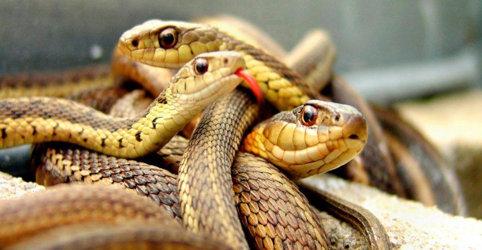 Guía de las serpientes