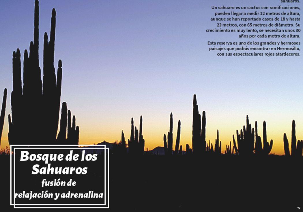 Bosque de los sahuaros, Sonora