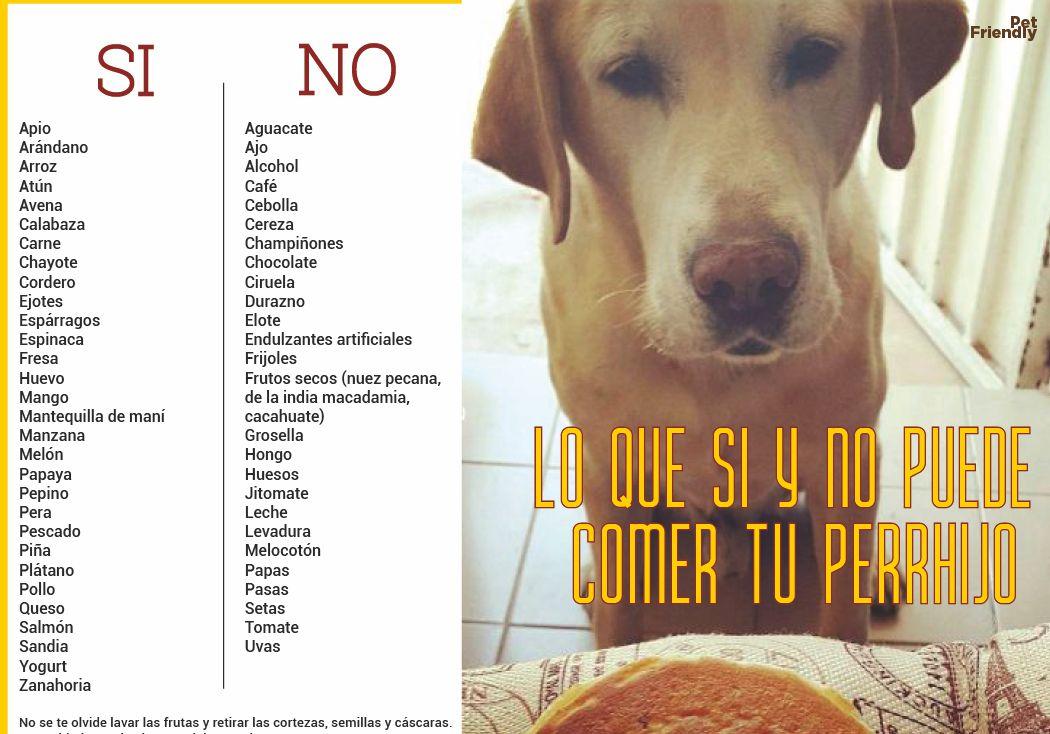 Lo que si y no puede comer tu perrhijo