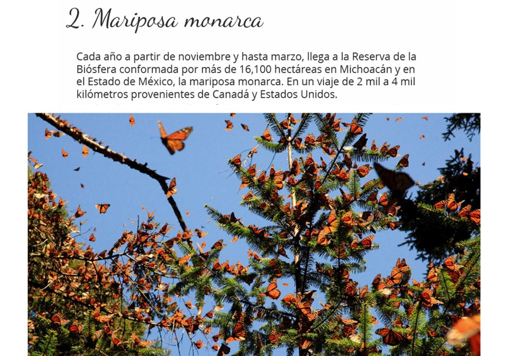 Mariposa monarca en Edo Méx.