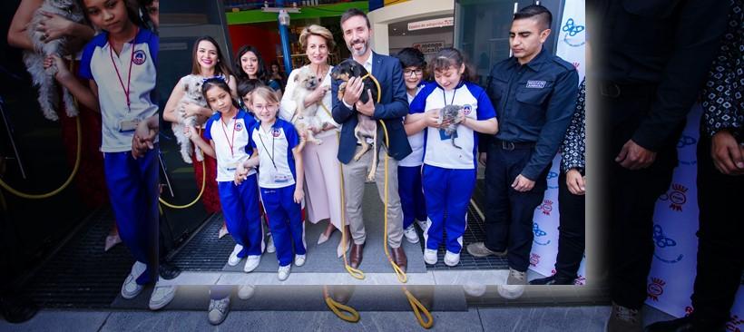 Royal Canin y PAPALOTE conscientes por el problema de perros y gatos en situación de calle