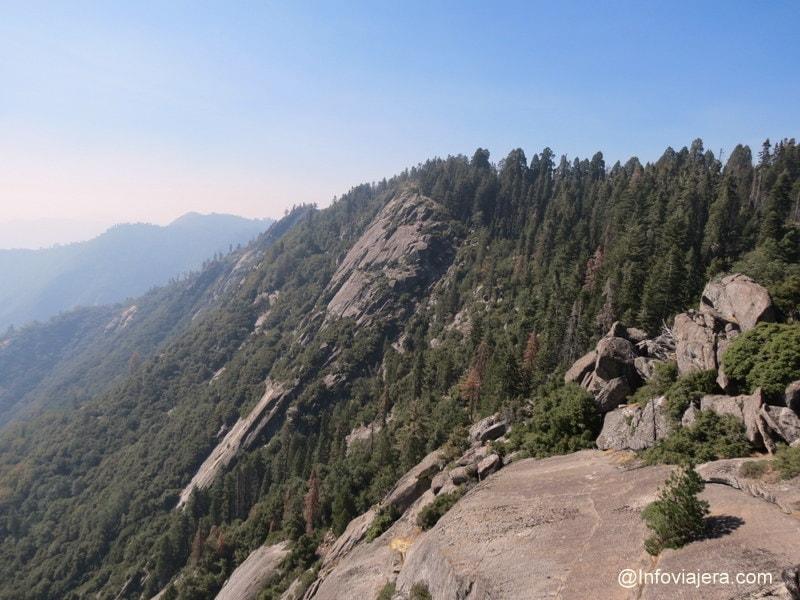 Sequoia6