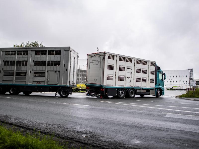 Ein Viehtransporter fährt auf das Betriebsgelände der Firma Tönnies. Foto: David Inderlied/dpa