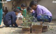 Daraz-Plantations