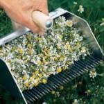 225x169_092347-recoltarea-plantelor-medicinale