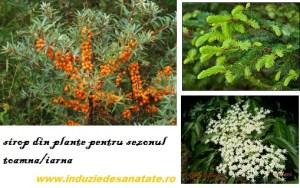 siropuri din plante