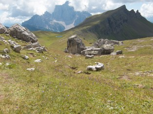 Alpine meadow on the way to rif Citta di Fiume