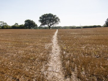 Track through stubble