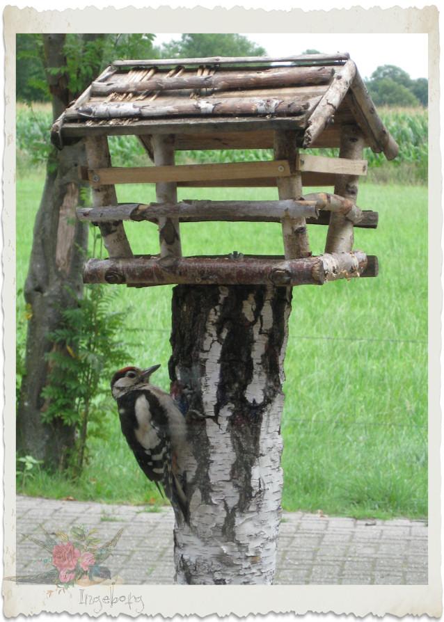 Woody woodpecker on the birdhouse
