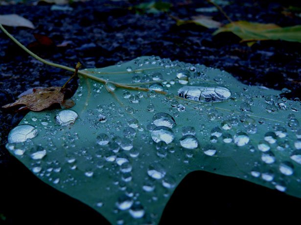 """Drops On Leaf"" by Anna Cervova"
