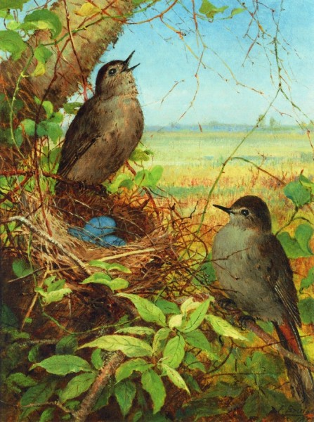 """Thrushes' Nest"" by Fidelia Bridges (May 19, 1834 – May 14, 1923) American Painter"