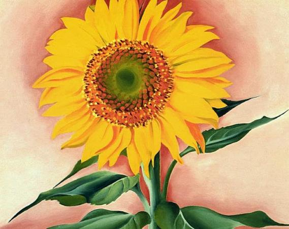 georgiaokeeffe-a-sunflower-from-maggie