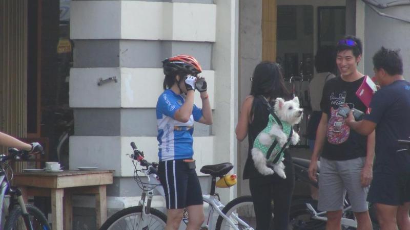 Dog on the bag, hund på ryggen