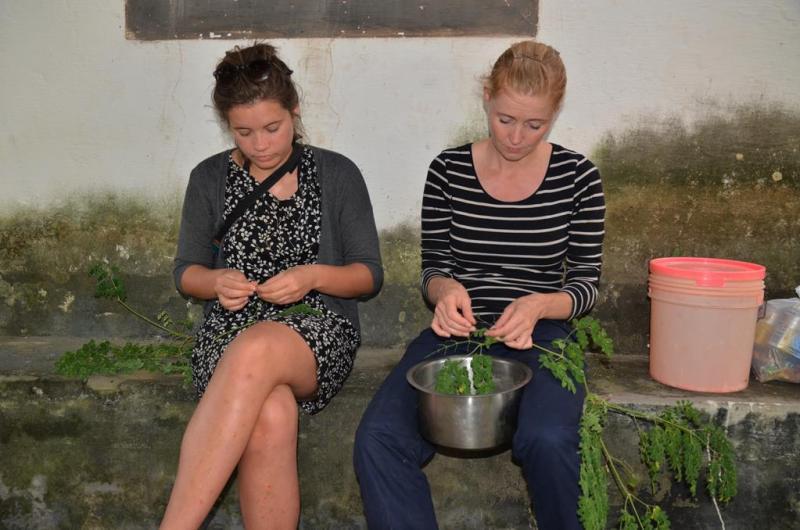 Der klargøres frisk moringa, til vores aftensmad.