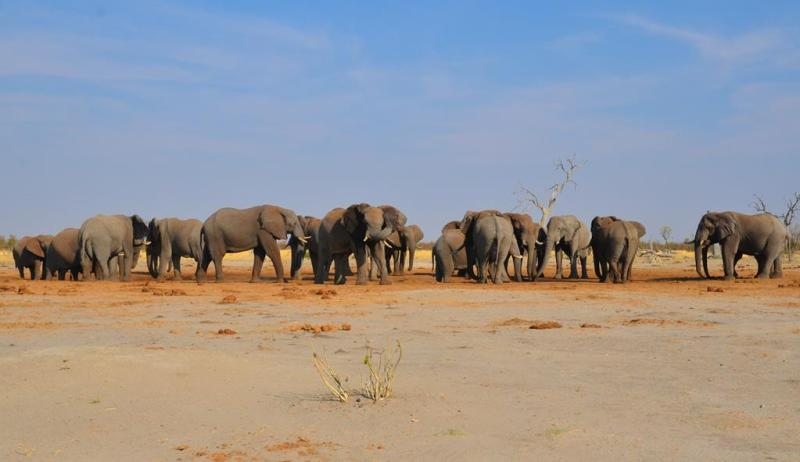 1. Chobe National Park 1 (11)