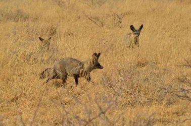 6. Central Kalahari Game Reserve (116)