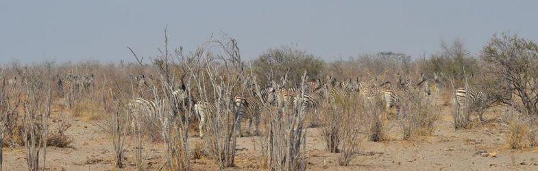 7. Makgadikgadi Pans National Park (78)