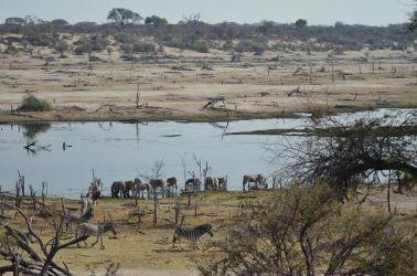 7. Makgagikgadi National Park 1 (84)