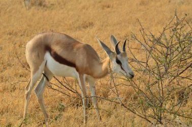 6. Central Kalahari Game Reserve (100)