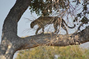 1. Chobe National Park 1 (25)
