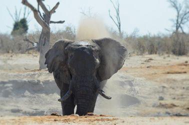 1. Chobe National Park 1 (40)