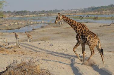 7. Makgagikgadi National Park 1 (103)