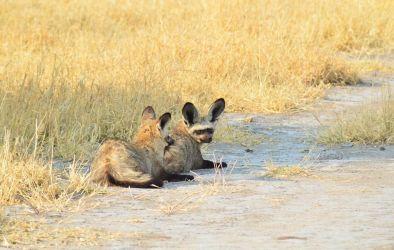 6. Central Kalahari Game Reserve (127)