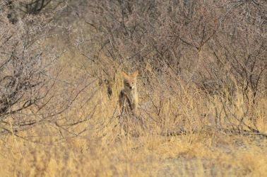 6. Central Kalahari Game Reserve (63)