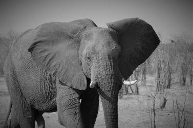 7. Makgadikgadi Pans National Park (118)