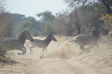 7. Makgagikgadi National Park 1 (64)