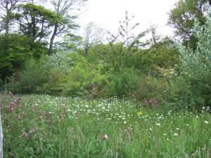 A pretty small area of meadow planted at Tyneham Farm barn.