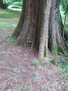 Scottish fairy door in a Western Red Cedar at the Larmer Tree Gardens.