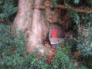 Red fairy door in a yew tree at the Larmer Tree Gardens.